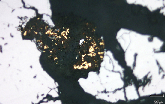 Detail of a cluster of individually very small gold grains within a vein of clay alteration (which is black in reflected light), filling fractures in massive vein quartz.
