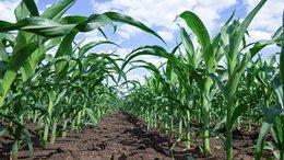AGR's Phosphate Resource Set to Deliver Value Uplift?