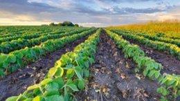 Swashbuckling PWN Well Positioned for $172BN Fertiliser Market